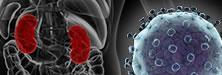 Looking Beyond the Liver: Hepatitis C, Kidney Disease, and the Nephrologist